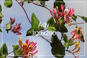 adv300x200-v1.jpg